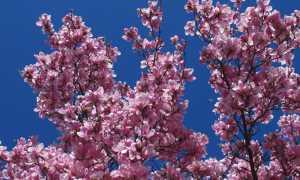 fiori pessina