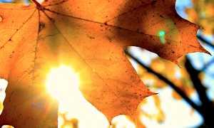 sole foglia autunno